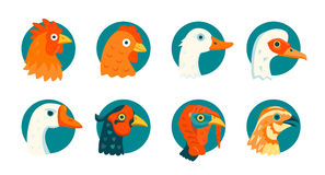 Domestic birds vector icons set Royalty Free Stock Photo