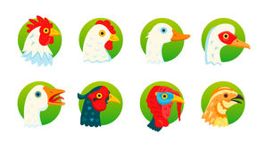 Domestic birds vector icons set Stock Photos