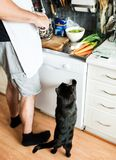 Domestic black cat looking up and begging for food. While a man is cutting smoked meat in the kitchen Stock Photography