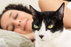 Domestic black and white cat and female owner sleeping in background. Concept of tranquility, peace. royalty free stock images