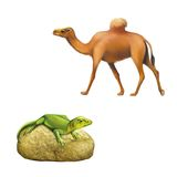 The domestic camel walking, green lizard sitting Royalty Free Stock Image
