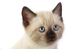 Domestic cat. Isolate on white Stock Photo