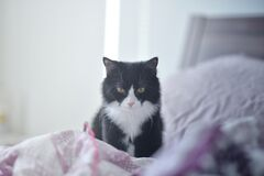 Domestic cat on bed