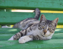 Domestic cat on a bench Stock Image