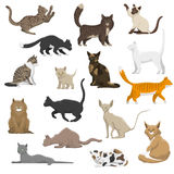 Domestic Cat Breeds Flat Icons Collection Royalty Free Stock Image