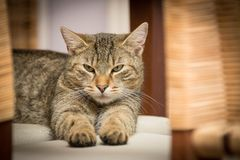 Domestic Cat, Cat, Adidas, Relaxed Stock Image