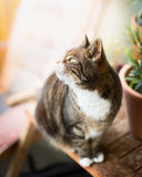 Domestic cat cat sits on a wooden table on the balcony and looking up Royalty Free Stock Photos