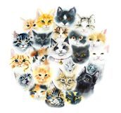 Domestic cat. Cats background. Watercolor hand drawn illustration stock photos