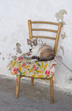 Domestic cat on chair. Royalty Free Stock Photos