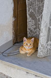 Domestic cat on chair. Stock Images
