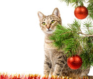 Domestic cat and Christmas tree. Domestic cat sitting next to a Christmas tree on a white background Stock Photography