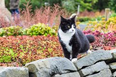 Domestic cat in city arctic park in Reykjavik. Travel to Iceland - domestic cat in public family arctic park in laugardalur valley of Reykjavik city in september Stock Images