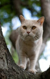 Domestic cat climbing a tree Royalty Free Stock Photo