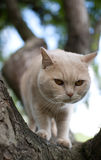 Domestic cat climbing a tree II Stock Photo