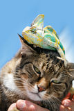 Domestic cat close up with a chameleon on his head Stock Photo