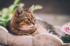 Domestic cat enjoy and laying in the garden courtyard. Of his household royalty free stock image