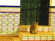 Domestic cat enjoying morning sun on tiled steps. Spanish tabby cat enjoying morning sun on tiled steps in Andalusian village stock images