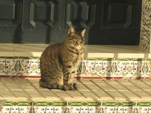 Domestic cat enjoying morning sun on tiled steps. Spanish tabby cat enjoying morning sun on tiled steps in Andalusian village stock photography