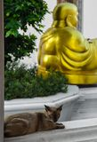 Buddha and a cat. Domestic cat enjoys the silence of the temple beside a Buddha statue royalty free stock image