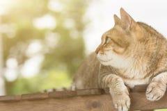 Domestic cat face Stock Photos