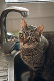 Domestic cat on the faucet Royalty Free Stock Photography