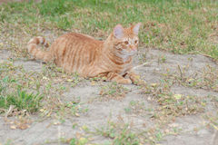 Domestic cat feeling wild Royalty Free Stock Photography