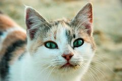 Tricolor lone cat stock photos