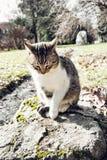 Domestic cat follows prey, animal scene Stock Image