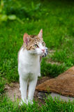 Domestic cat in the garden Royalty Free Stock Images