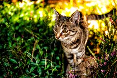 Domestic cat in garden. Shot of domestic cat in his natural environment Stock Images
