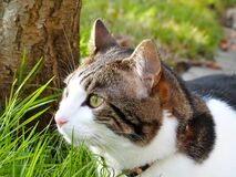 Domestic cat in green grass