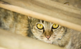 Domestic cat hiding itself. Behind plank of wood Royalty Free Stock Photography