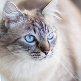 Domestic cat. Royalty Free Stock Photos