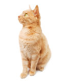 Domestic cat Stock Image
