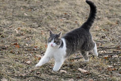Domestic cat jumping. In spring garden Royalty Free Stock Photography