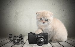 Domestic Cat Royalty Free Stock Photography