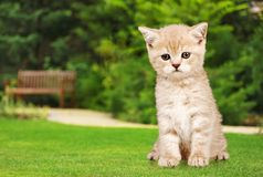 Domestic Cat Stock Images