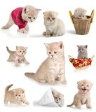 Domestic Cat. Kitten Humor Cute Isolated Pets Animal Royalty Free Stock Image