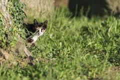 Domestic cat looking at camera behind a tree Royalty Free Stock Photography