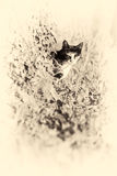 Domestic cat looking at camera behind a tree. Sepia toned. Stock Photography