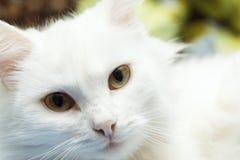 Domestic cat looking at camera. Close-up portrait. Domestic cat looking at camera. Close-up portrait Stock Image