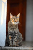 Domestic cat looking into the distance Stock Photos