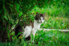 Domestic cat. The domestic cat is a mammal of the family Felidae of Carnivora. Earlier, the domestic cat was often considered as a separate species. From the stock photo