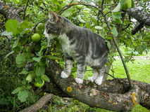 Domestic cat. The domestic cat is the most common pet. Cats are notable for their beautiful coat, expressive eyes, when the eyes of the cat has a large number Stock Photography