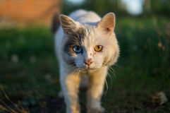 Domestic cat. The domestic cat is the most common pet. Cats are notable for their beautiful coat, expressive eyes, when the eyes of the cat has a large number Stock Image