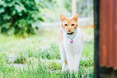 Domestic cat with necklace in garden Royalty Free Stock Photos