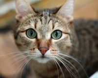 Domestic cat nose close up Stock Images