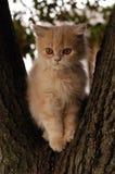Domestic cat. Orange domestic cat in tree Royalty Free Stock Photo