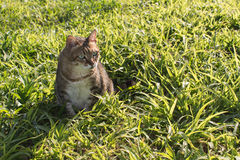 Domestic cat in outdoor. Cute domestic cat in the outdoor Stock Photos
