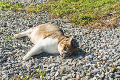 Domestic cat in outdoor. Cute domestic cat in the outdoor Royalty Free Stock Images